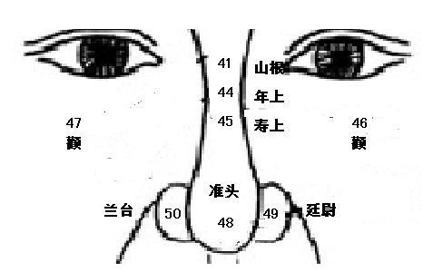 鼻子的画法步骤图正面侧面